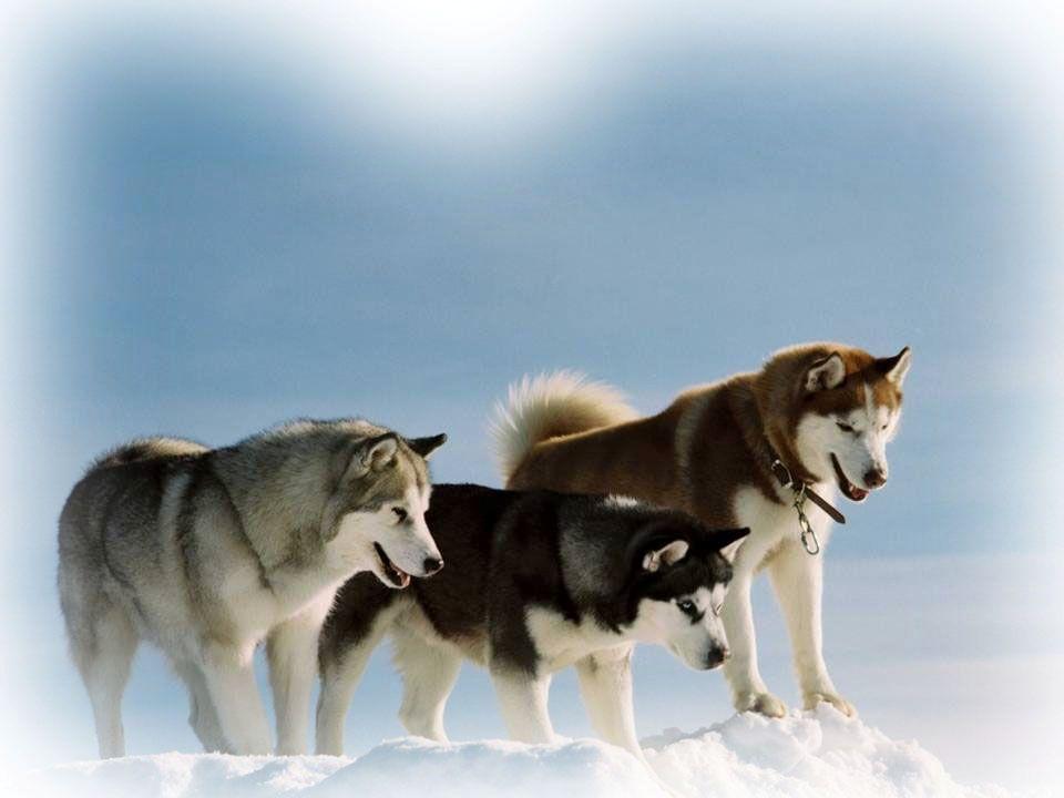 In Siberië is het in de winter extreem koud, in de zomer echter warmer dan in Europa.