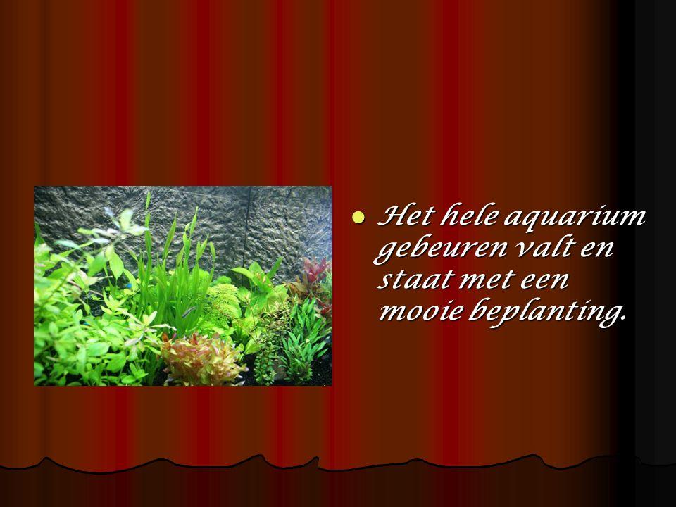Het hele aquarium gebeuren valt en staat met een mooie beplanting.