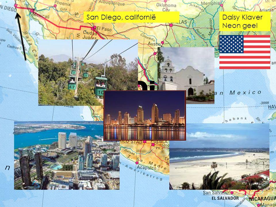 San Diego Daisy Klaver Neon geel San Diego, californië