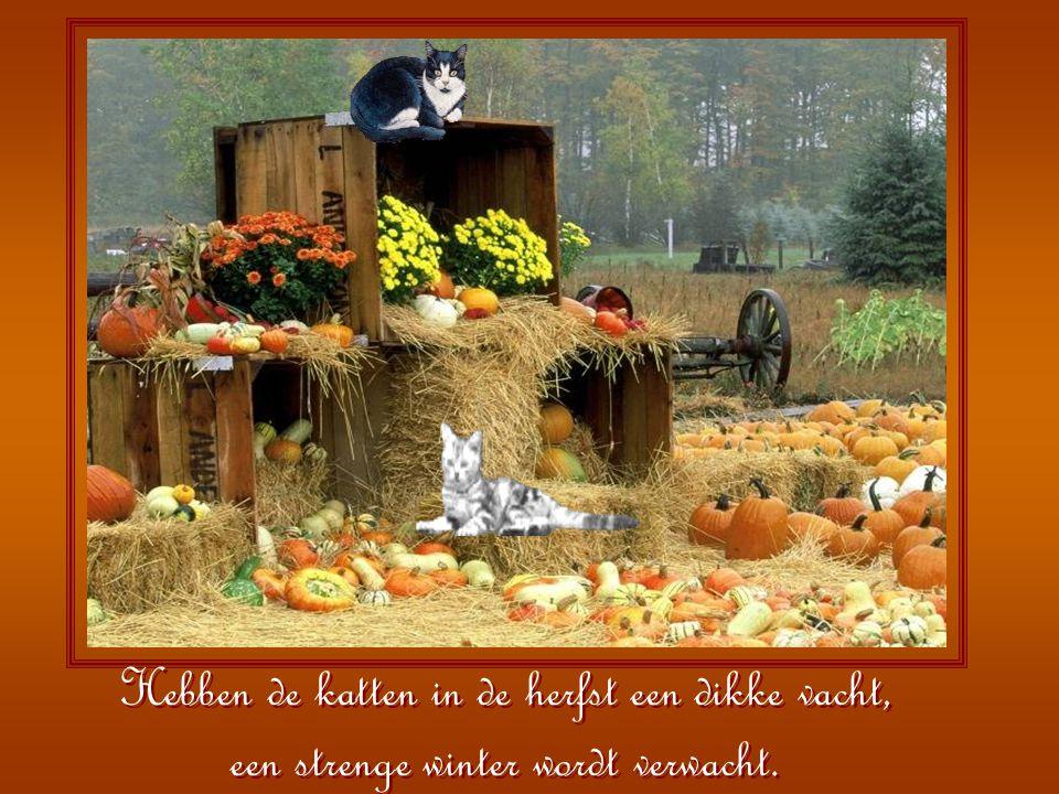 Is er in de herfst veel wind uit het westen, evenlang zal hoge wind ons in het voorjaar pesten.