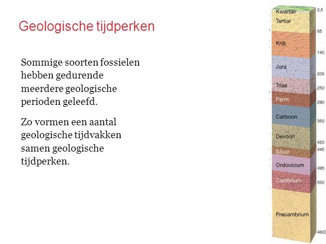 Zo vormen een aantal geologische tijdvakken samen geologische tijdperken. Sommige soorten fossielen hebben gedurende meerdere geologische perioden gel