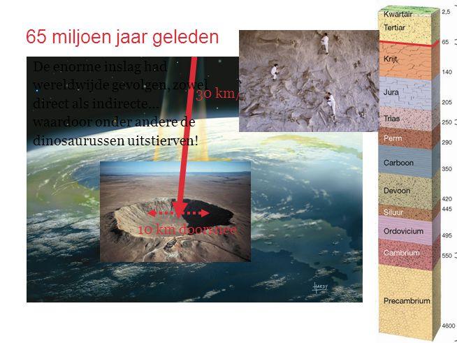 65 miljoen jaar geleden 30 km/s 10 km doorsnee De enorme inslag had wereldwijde gevolgen, zowel direct als indirecte… waardoor onder andere de dinosau