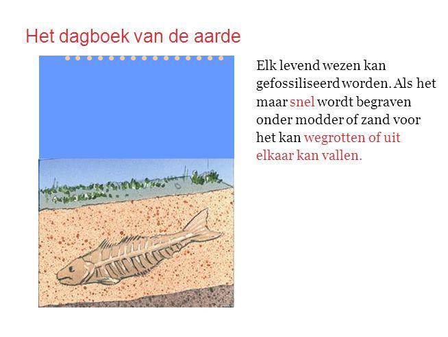 Elk levend wezen kan gefossiliseerd worden. Als het maar wordt begraven onder modder of zand voor het kan het kan wegrotten of uit elkaar kan vallen.