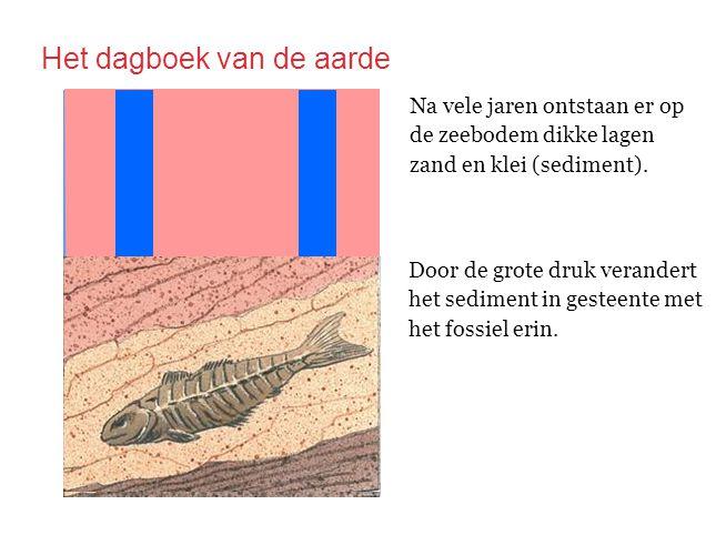 Na vele jaren ontstaan er op de zeebodem dikke lagen zand en klei (sediment). Door de grote druk verandert het sediment in gesteente met het fossiel e