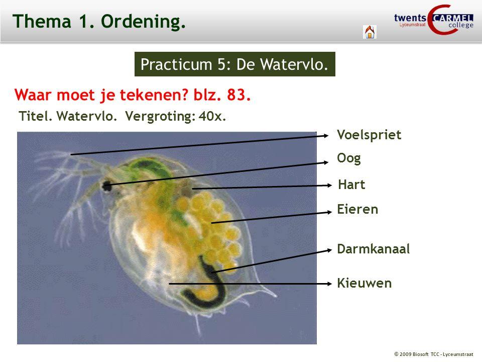 © 2009 Biosoft TCC - Lyceumstraat Thema 1. Ordening. Practicum 5: De Watervlo. Waar moet je tekenen? blz. 83. Titel. Watervlo. Vergroting: 40x. Oog Vo