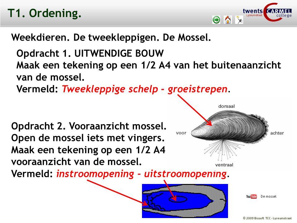 © 2009 Biosoft TCC - Lyceumstraat T1. Ordening. Weekdieren. De tweekleppigen. De Mossel. Opdracht 1. UITWENDIGE BOUW Maak een tekening op een 1/2 A4 v