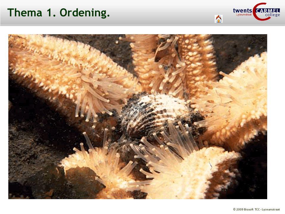 © 2009 Biosoft TCC - Lyceumstraat Thema 1. Ordening.