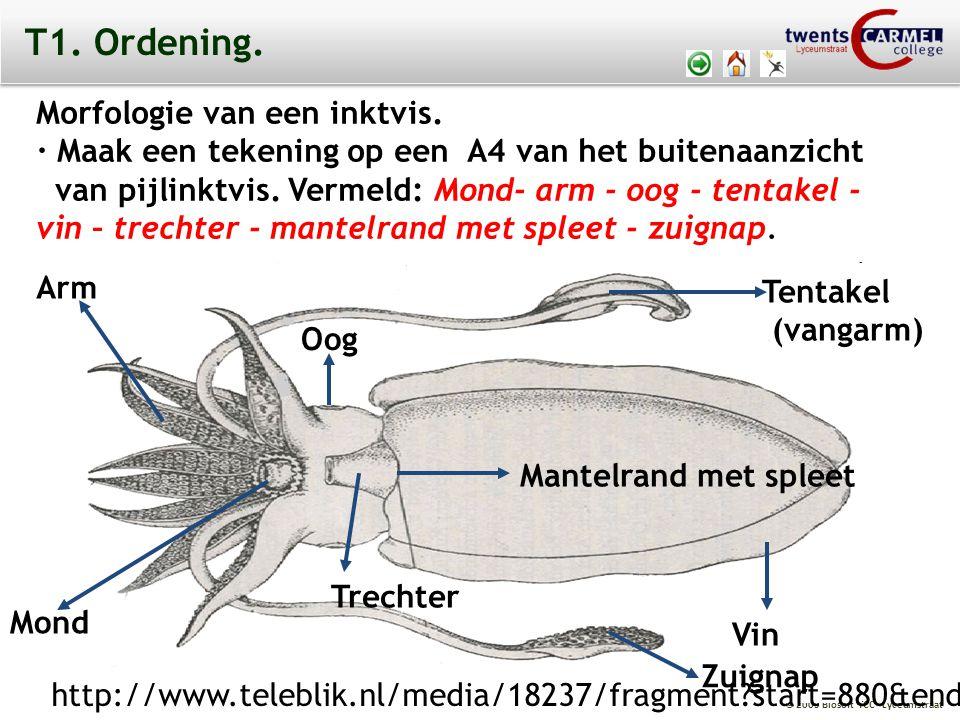 © 2009 Biosoft TCC - Lyceumstraat T1. Ordening. Morfologie van een inktvis. · Maak een tekening op een A4 van het buitenaanzicht van pijlinktvis. Verm