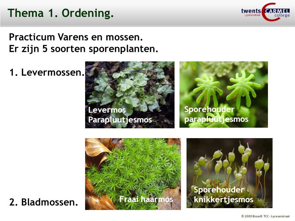 © 2009 Biosoft TCC - Lyceumstraat Thema 1. Ordening. Practicum Varens en mossen. Er zijn 5 soorten sporenplanten. 1. Levermossen. 2. Bladmossen. Lever