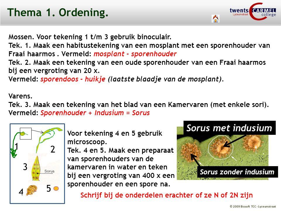 © 2009 Biosoft TCC - Lyceumstraat Thema 1. Ordening. Mossen. Voor tekening 1 t/m 3 gebruik binoculair. Tek. 1. Maak een habitustekening van een mospla