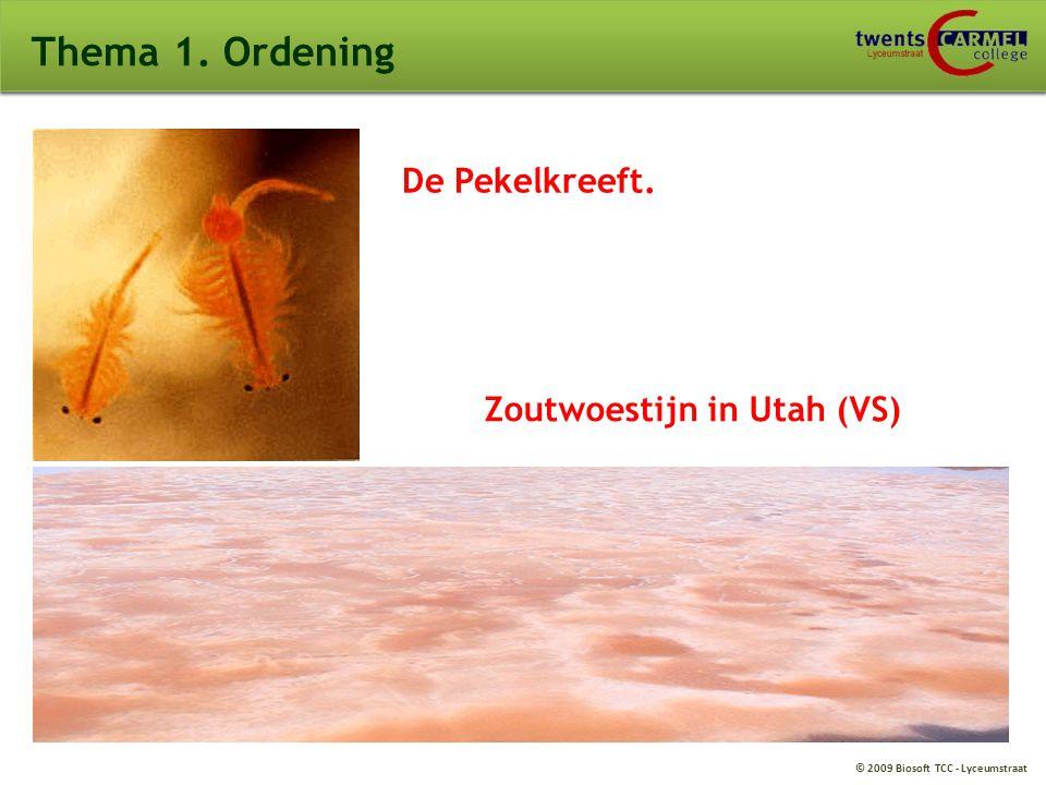 © 2009 Biosoft TCC - Lyceumstraat Thema 1. Ordening De Pekelkreeft. Zoutwoestijn in Utah (VS)