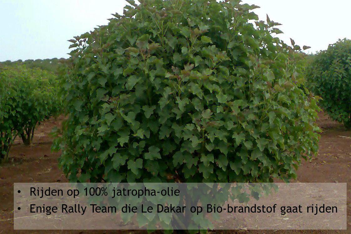 Rijden op 100% jatropha-olie Enige Rally Team die Le Dakar op Bio-brandstof gaat rijden
