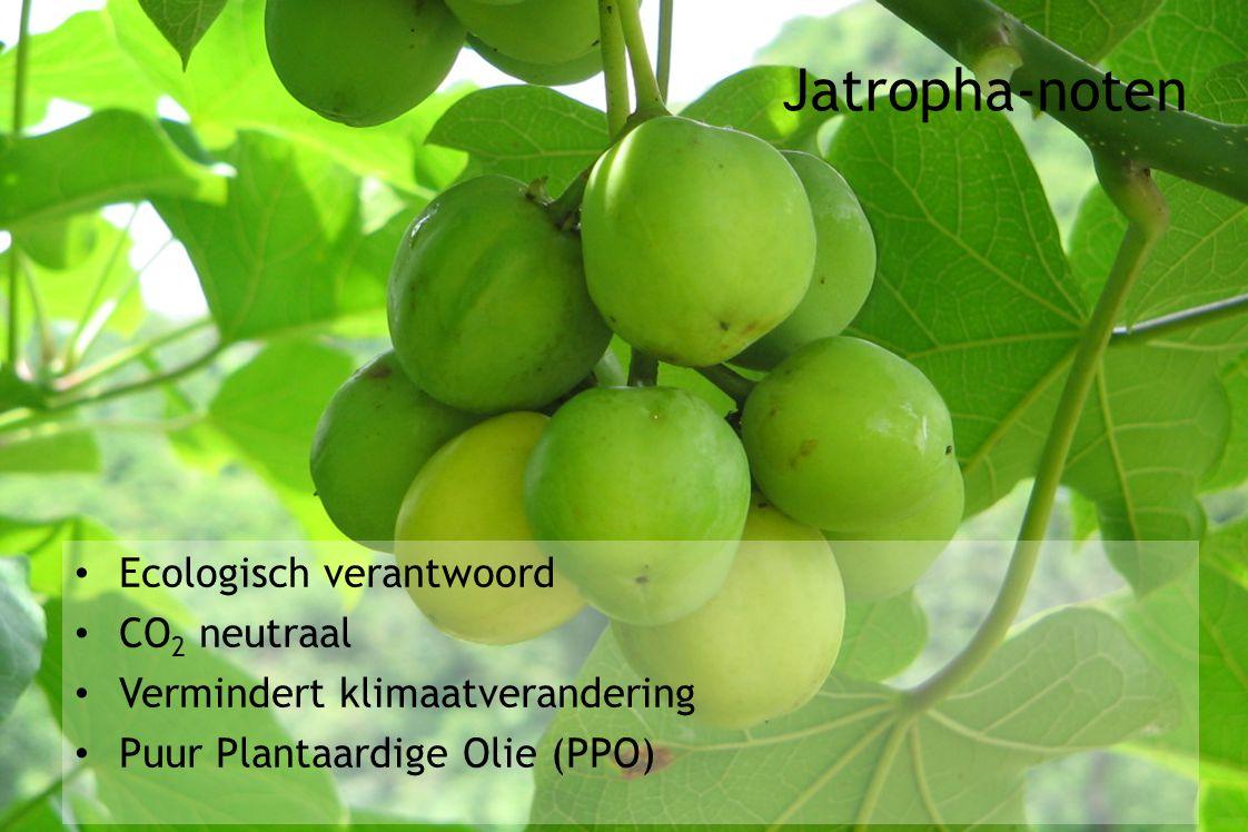 Ecologisch verantwoord CO 2 neutraal Vermindert klimaatverandering Puur Plantaardige Olie (PPO) Jatropha-noten