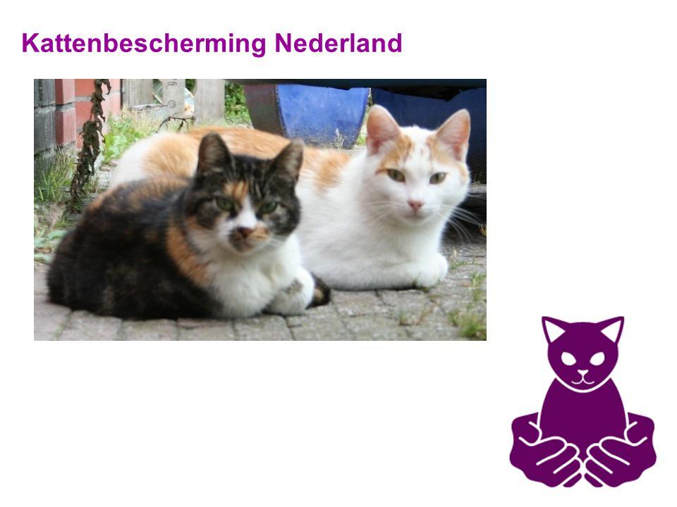 Kattenbescherming Nederland