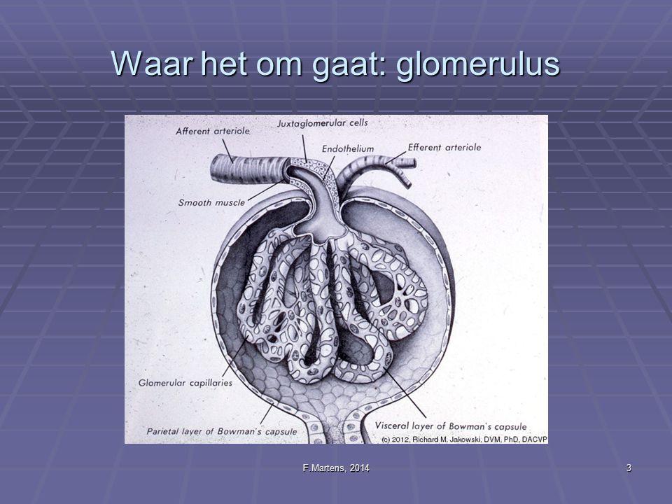 F.Martens, 20143 Waar het om gaat: glomerulus