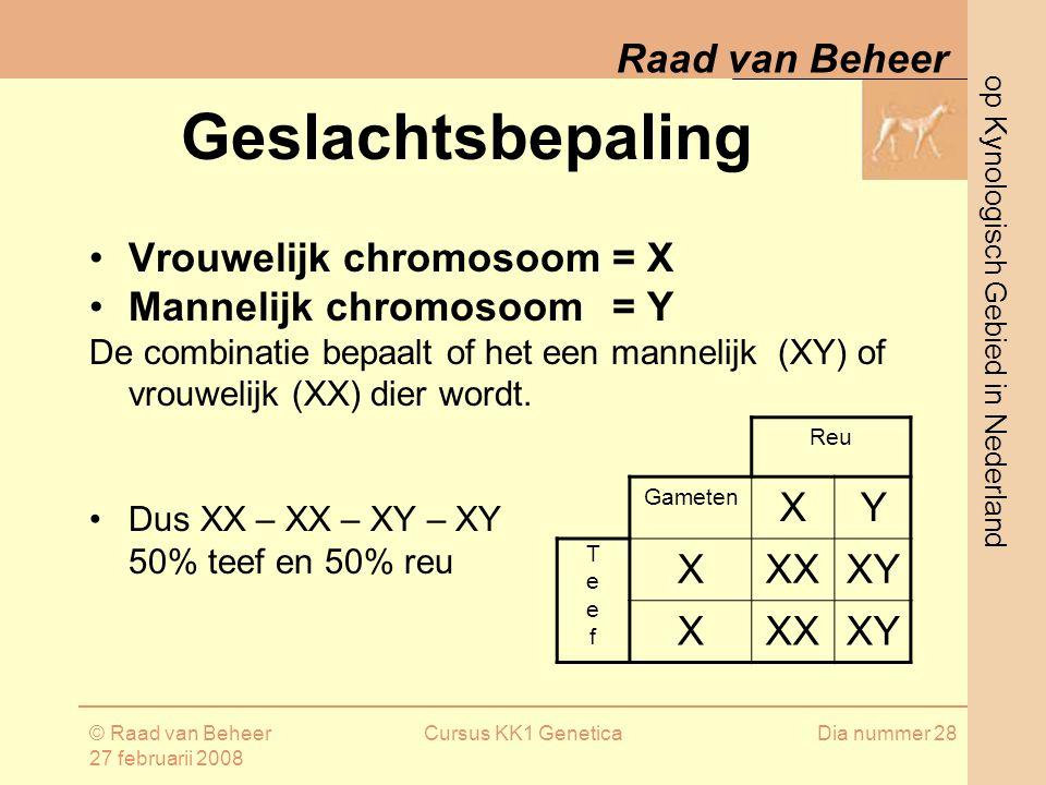 op Kynologisch Gebied in Nederland Raad van Beheer © Raad van Beheer 27 februarii 2008 Cursus KK1 GeneticaDia nummer 28 Geslachtsbepaling Vrouwelijk chromosoom= X Mannelijk chromosoom = Y De combinatie bepaalt of het een mannelijk (XY) of vrouwelijk (XX) dier wordt.