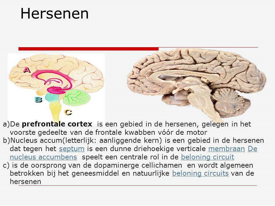 Hersenen a)De prefrontale cortex is een gebied in de hersenen, gelegen in het voorste gedeelte van de frontale kwabben vóór de motor b)Nucleus accum(l