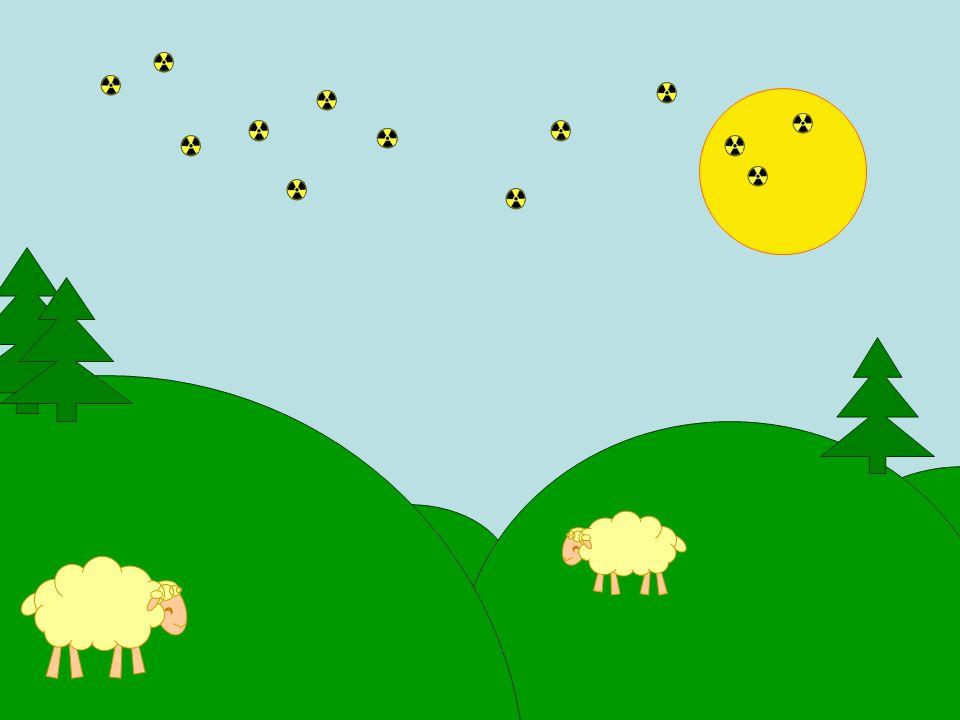 Je mag je schapen de komende drie weken niet verkopen of slachten Geen punt!