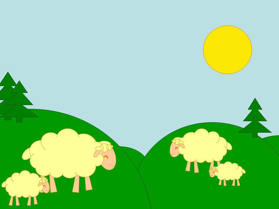 Ik heb mijn schapen nog steeds, ze kosten een hoop geld.