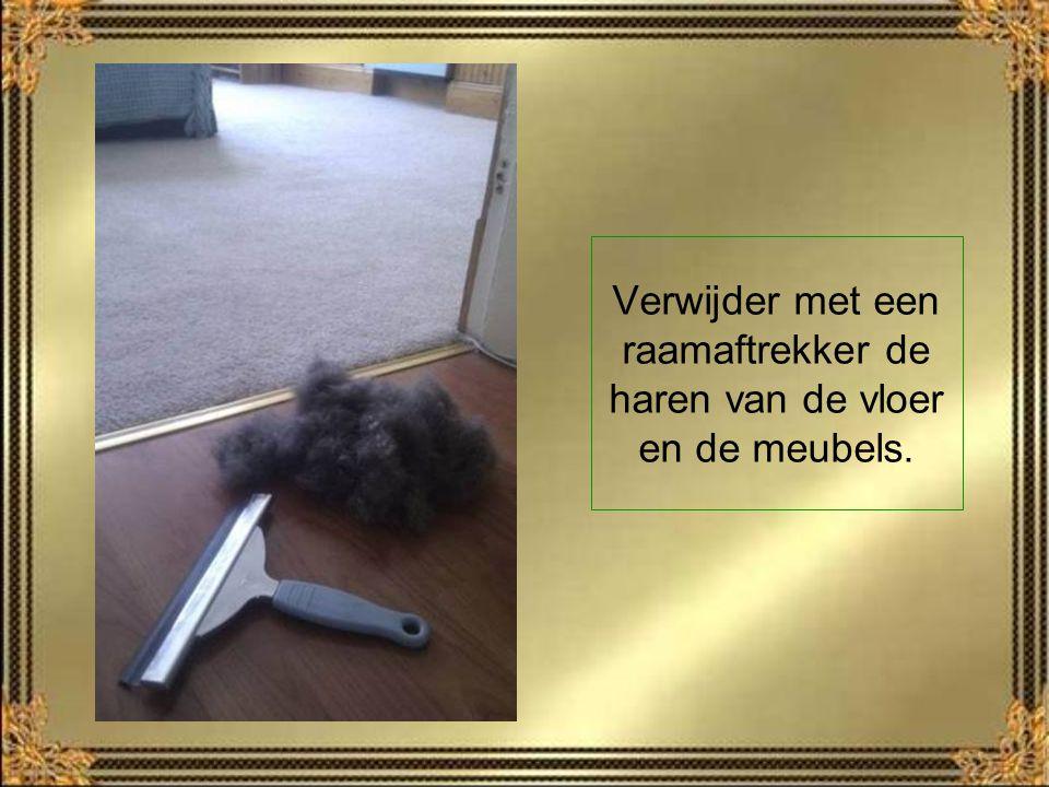 Verwijder met een raamaftrekker de haren van de vloer en de meubels.