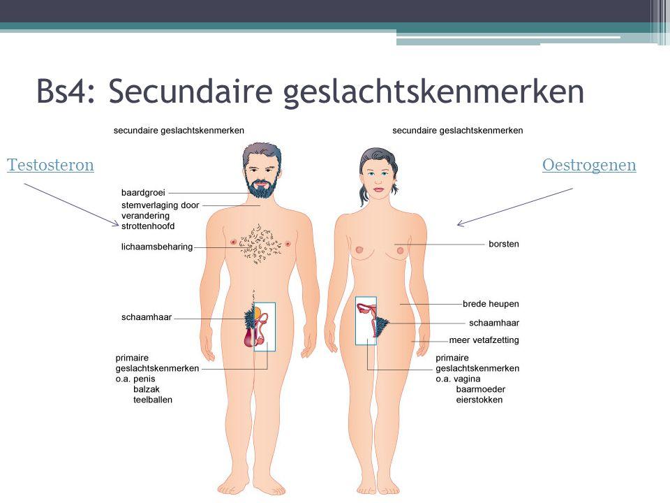 Bs4: Secundaire geslachtskenmerken TestosteronOestrogenen
