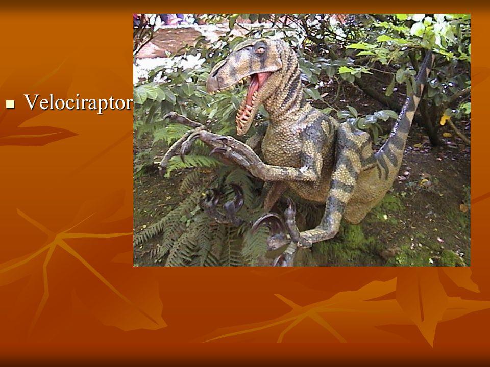 Velociraptor Velociraptor