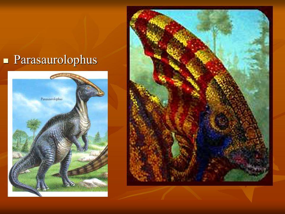 Parasaurolophus Parasaurolophus
