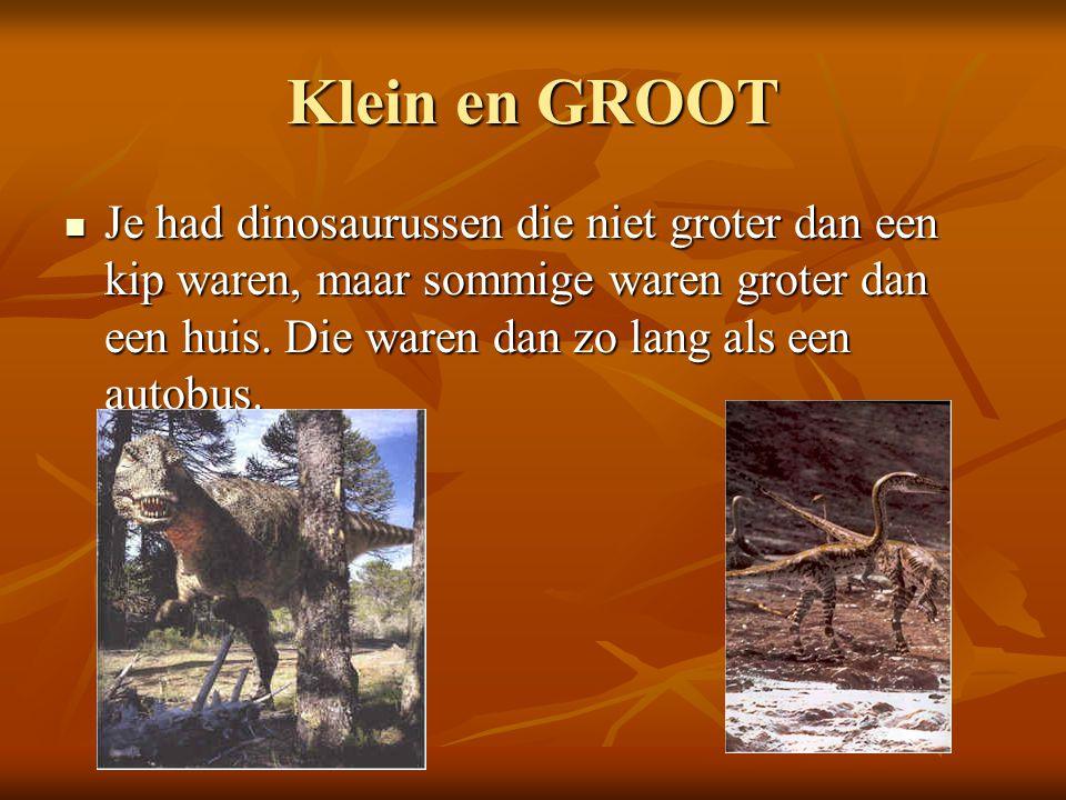 Klein en GROOT Je had dinosaurussen die niet groter dan een kip waren, maar sommige waren groter dan een huis. Die waren dan zo lang als een autobus.