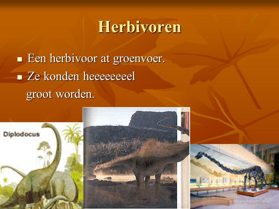 Herbivoren Een herbivoor at groenvoer. Een herbivoor at groenvoer. Ze konden heeeeeeeel Ze konden heeeeeeeel groot worden. groot worden.