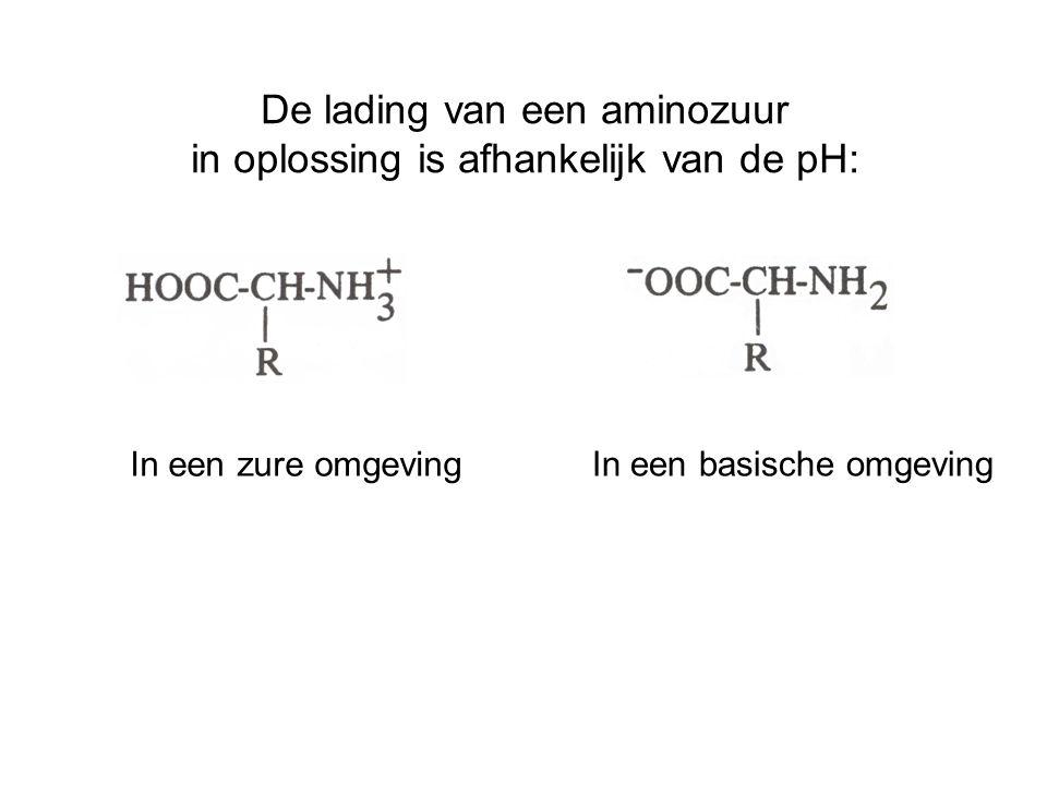 De lading van een aminozuur in oplossing is afhankelijk van de pH: In een zure omgeving In een basische omgeving