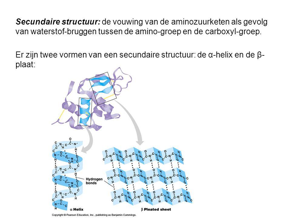 Secundaire structuur: de vouwing van de aminozuurketen als gevolg van waterstof-bruggen tussen de amino-groep en de carboxyl-groep. Er zijn twee vorme