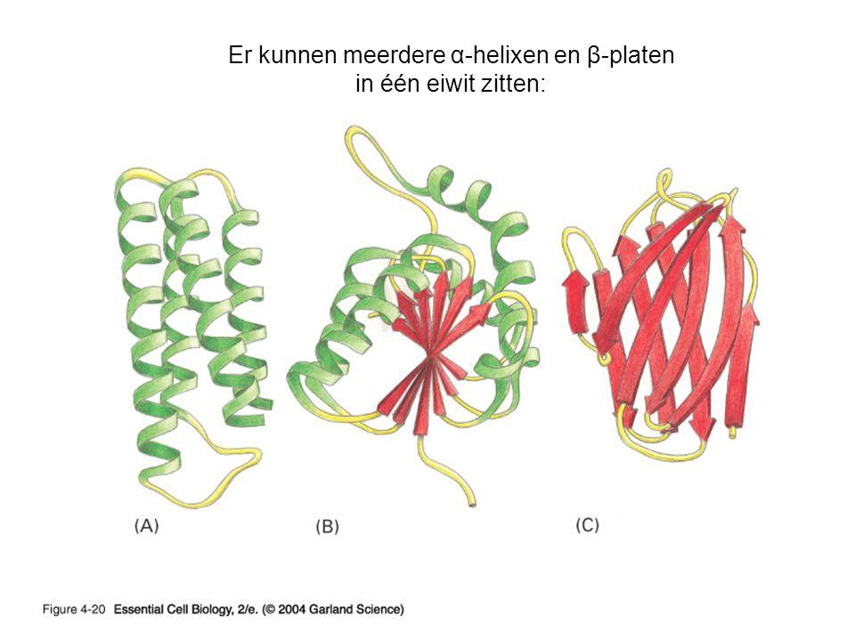 Er kunnen meerdere α-helixen en β-platen in één eiwit zitten: