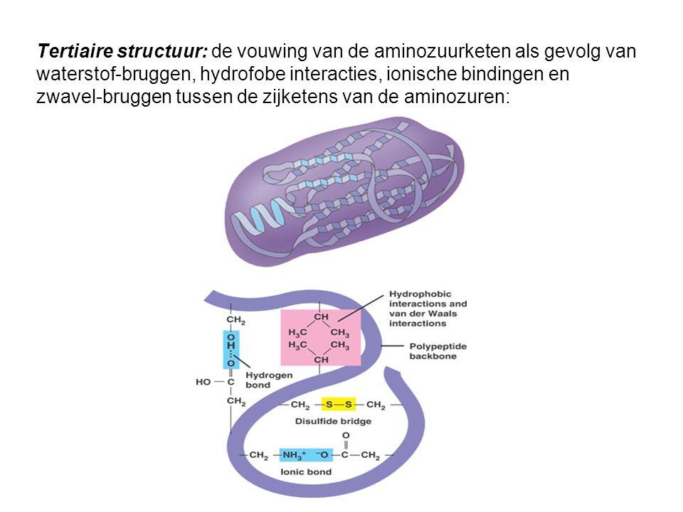 Tertiaire structuur: de vouwing van de aminozuurketen als gevolg van waterstof-bruggen, hydrofobe interacties, ionische bindingen en zwavel-bruggen tu