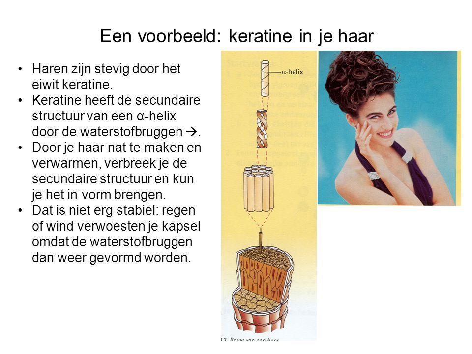 Een voorbeeld: keratine in je haar Haren zijn stevig door het eiwit keratine. Keratine heeft de secundaire structuur van een α-helix door de waterstof