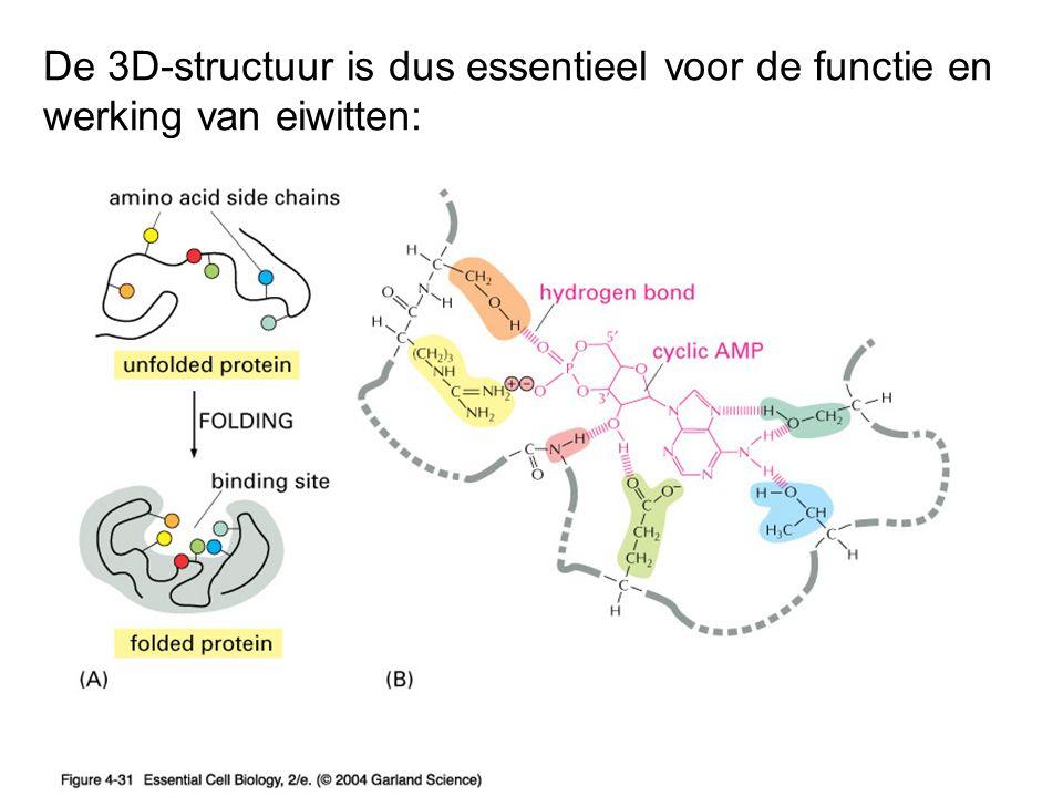 De 3D-structuur is dus essentieel voor de functie en werking van eiwitten: