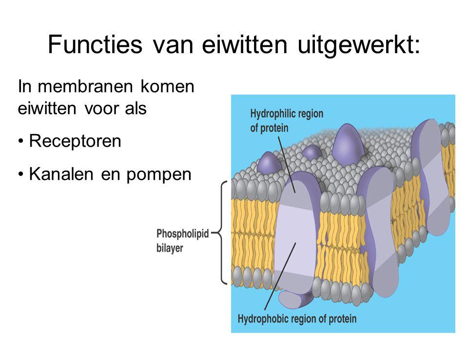 Naamgeving eiwitten (2) De naam van enzymen eindigt op –ase, bijvoorbeeld: alcoholdehydrogenase, DNA-polymerase, amylase De naam van andere eiwitten eindigt op –ine, bijvoorbeeld: insuline, actine Natuurlijk zijn er ook uitzonderingen, bijvoorbeeld histonen, collageen En er zijn moderne benamingen, zoals p53, EGF