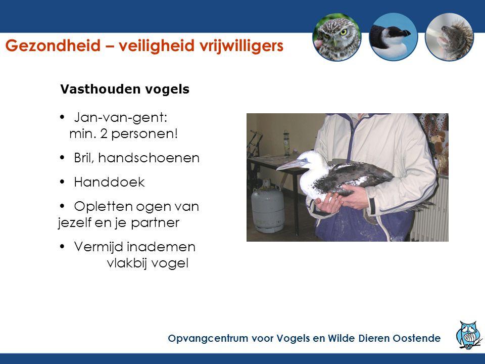 Vasthouden vogels Jan-van-gent: min. 2 personen! Bril, handschoenen Handdoek Opletten ogen van jezelf en je partner Vermijd inademen vlakbij vogel Gez