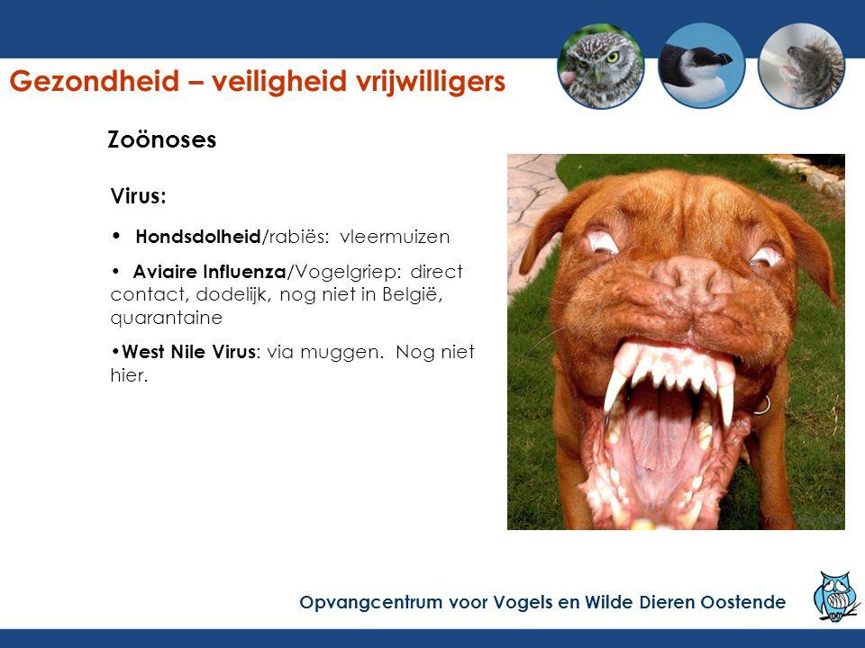Virus: Hondsdolheid /rabiës: vleermuizen Aviaire Influenza /Vogelgriep: direct contact, dodelijk, nog niet in België, quarantaine West Nile Virus : via muggen.