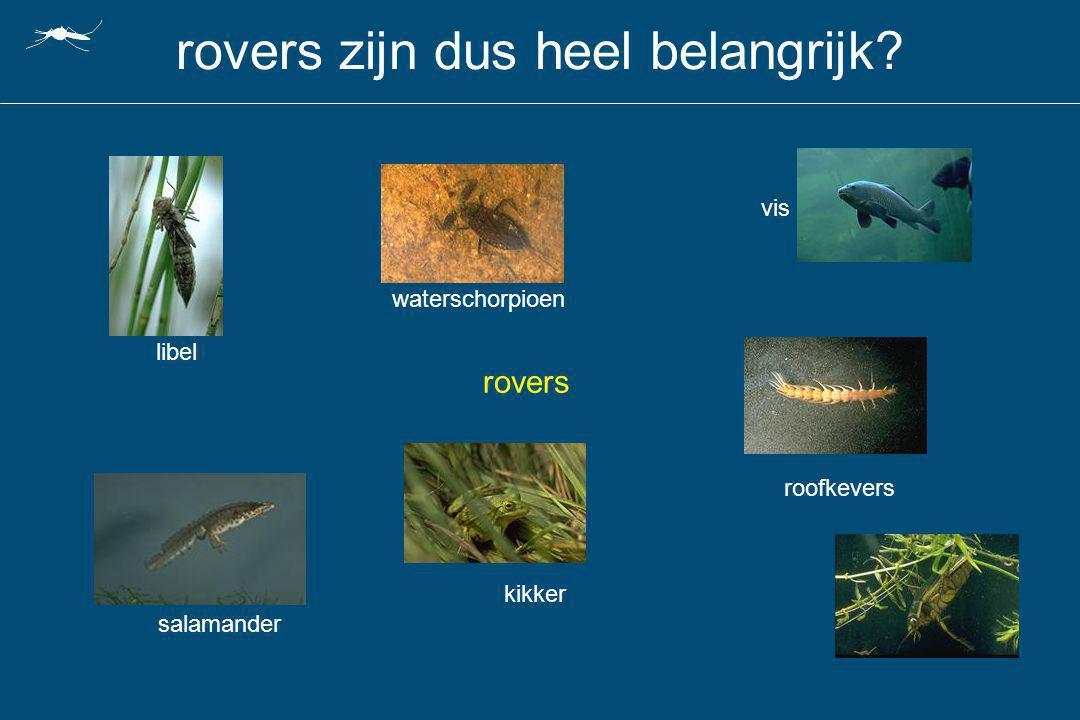 rovers zijn dus heel belangrijk? waterschorpioen rovers libel salamander vis roofkevers kikker