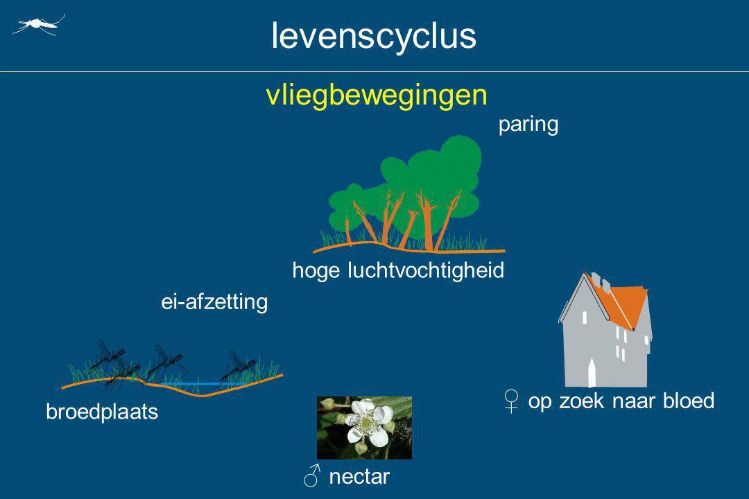 levenscyclus vliegbewegingen hoge luchtvochtigheid ♀ op zoek naar bloed ♂ nectar paring broedplaats ei-afzetting