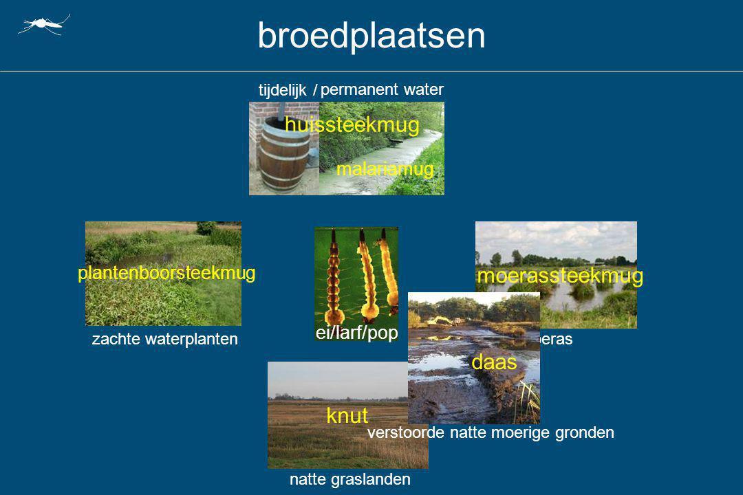 moerasnatte graslanden verstoorde natte moerige gronden permanent water broedplaatsen ei/larf/pop tijdelijk / zachte waterplanten moerassteekmug plant