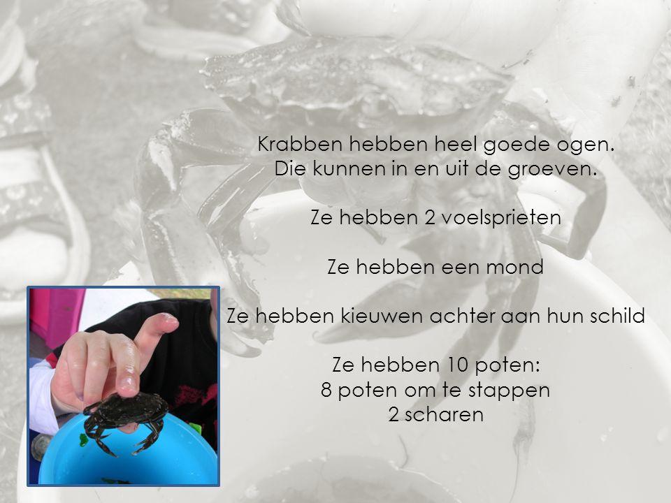 Krabben hebben heel goede ogen. Die kunnen in en uit de groeven. Ze hebben 2 voelsprieten Ze hebben een mond Ze hebben kieuwen achter aan hun schild Z