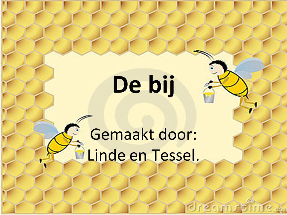 De bij Gemaakt door: Linde en Tessel.