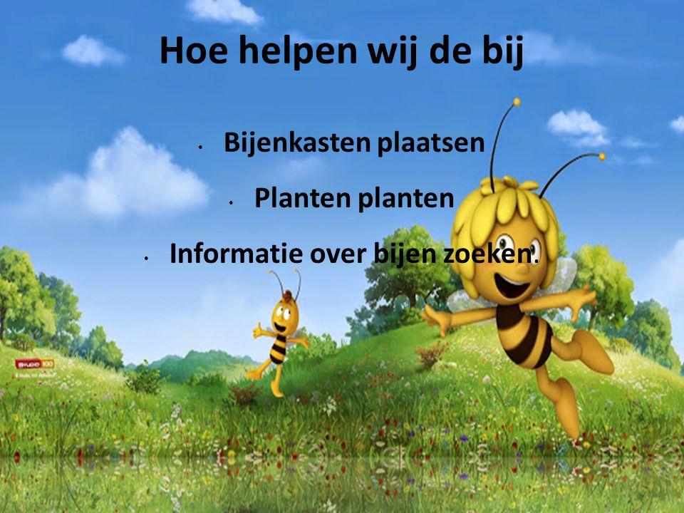 Hoe helpen wij de bij Bijenkasten plaatsen Planten planten Informatie over bijen zoeken.