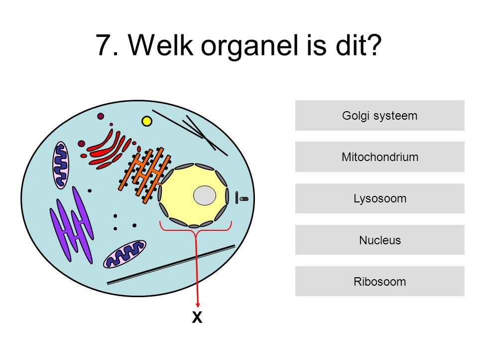 7. Welk organel is dit? X Mitochondrium Lysosoom Nucleus Ribosoom Golgi systeem