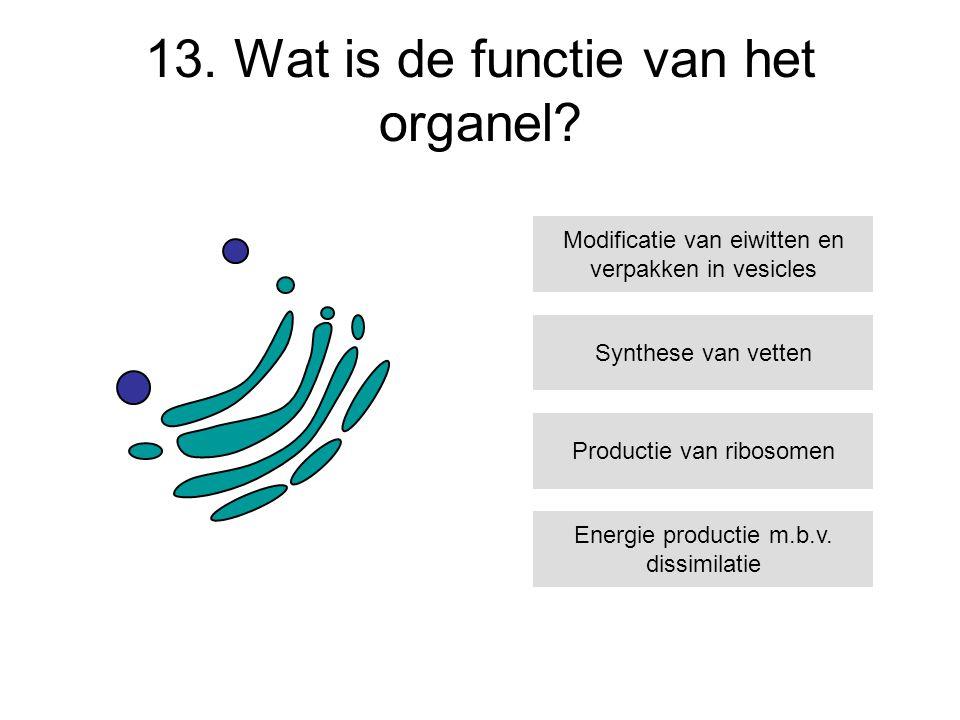 13. Wat is de functie van het organel? Synthese van vetten Productie van ribosomen Energie productie m.b.v. dissimilatie Modificatie van eiwitten en v