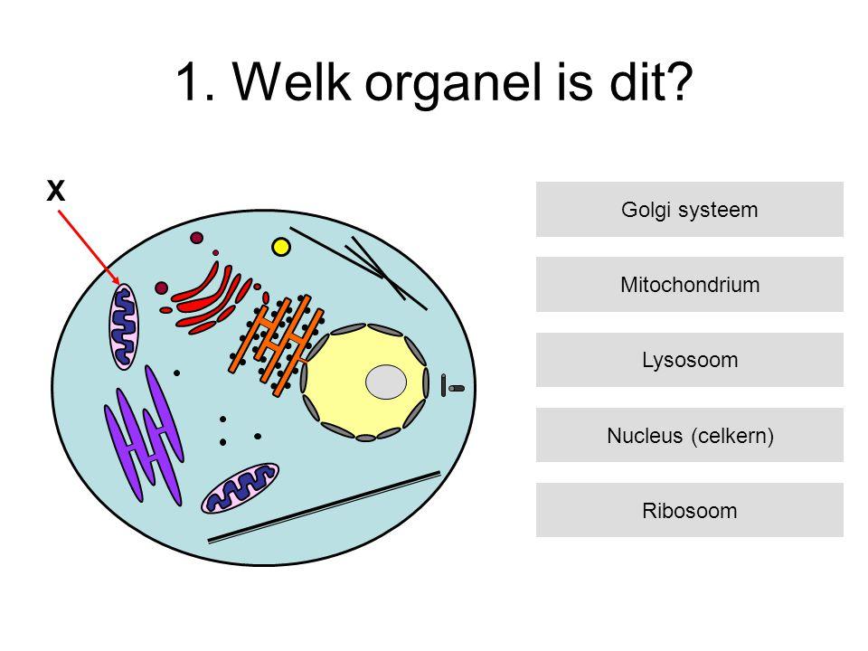 1. Welk organel is dit? X Mitochondrium Lysosoom Nucleus (celkern) Ribosoom Golgi systeem