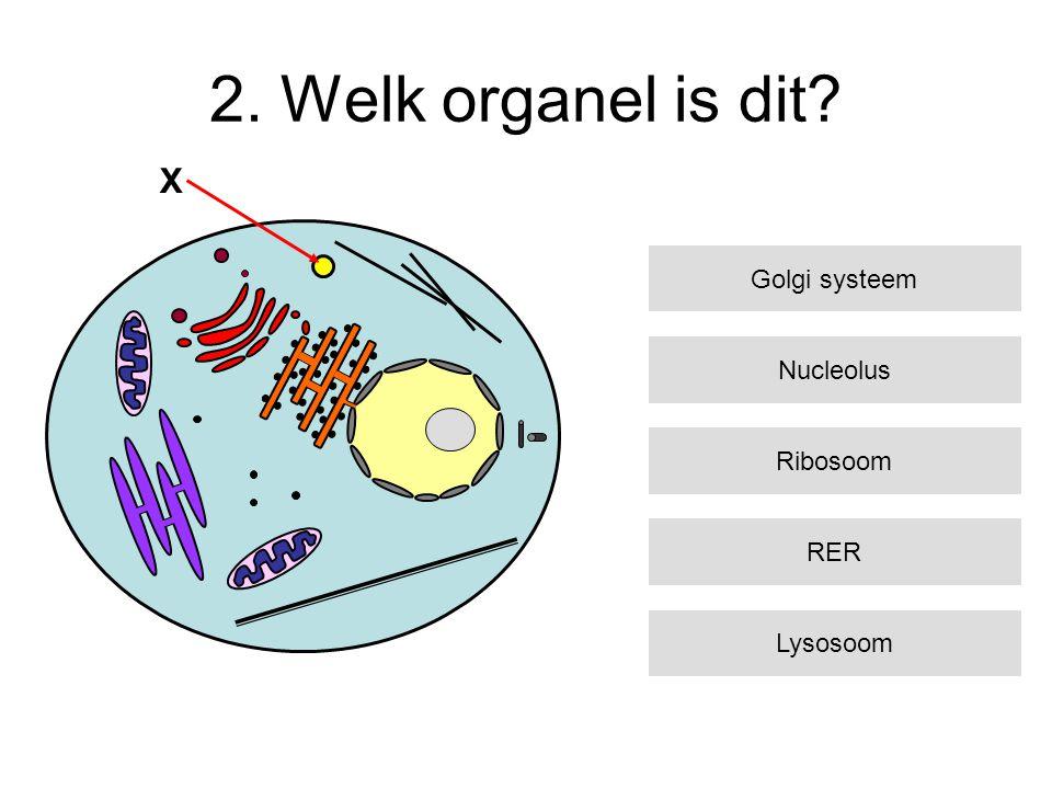 2. Welk organel is dit? Nucleolus Ribosoom RER Lysosoom Golgi systeem X