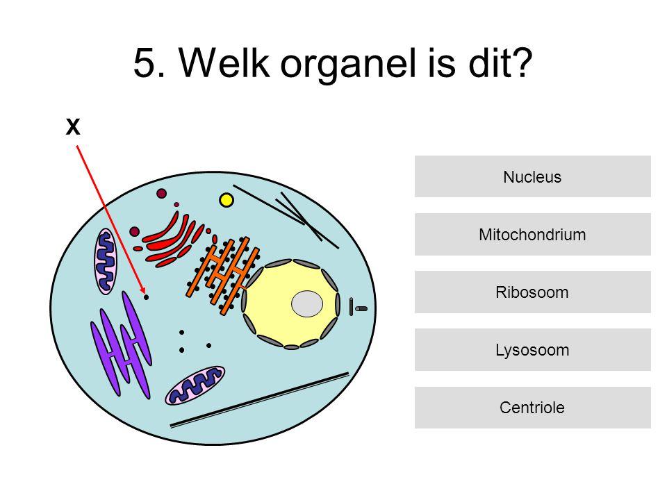 5. Welk organel is dit? Mitochondrium Ribosoom Lysosoom Centriole Nucleus X