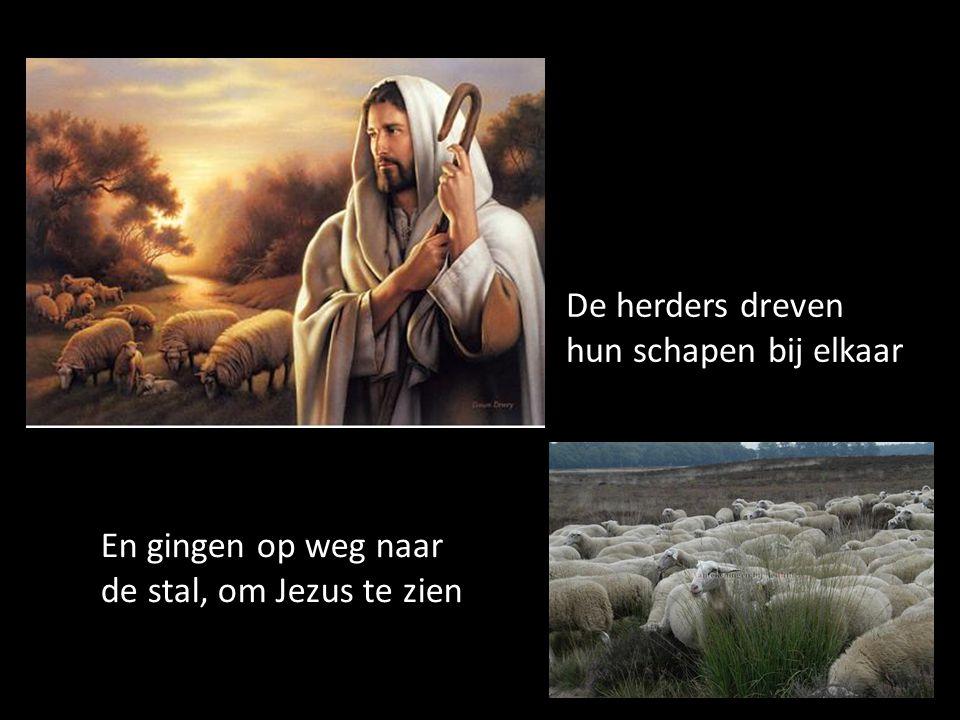 De herders dreven hun schapen bij elkaar En gingen op weg naar de stal, om Jezus te zien
